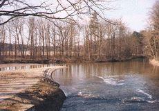Novořecké močály - soutok dvou ramen Nové řeky
