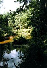 Stará řeka